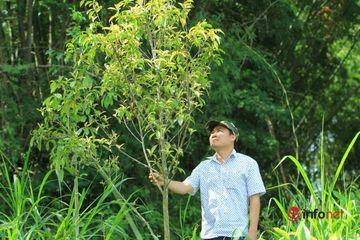 Hành trình 3.000 cây trà hoa vàng quý hiếm đến Vườn Quốc gia Cát Tiên