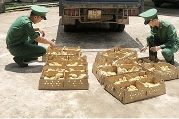 Quảng Ninh: Tiêu hủy hàng nghìn con gà giống nhập lậu phòng dịch bệnh