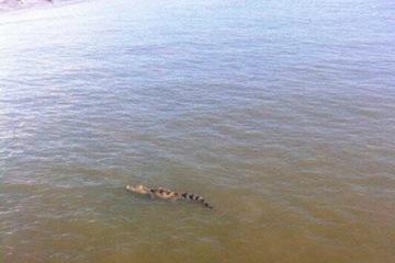 Quận 12 cảnh báo có cá sấu trên sông: Người lái đò đã thấy gì?