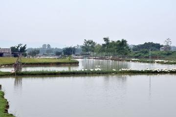 Nghệ An: Thêm trại vịt bị nhiễm dịch cúm gia cầm A/H5N6
