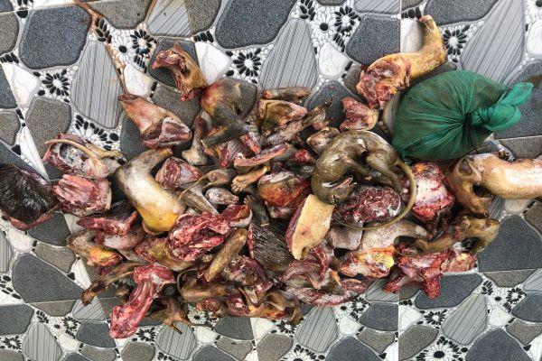 Lâm Đồng: Liên tiếp triệt phá các vụ mua bán động vật hoang dã
