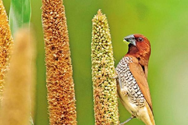 Người đàn ông dùng 2.000 mét vuông đất nuôi hàng trăm con chim hoang dã