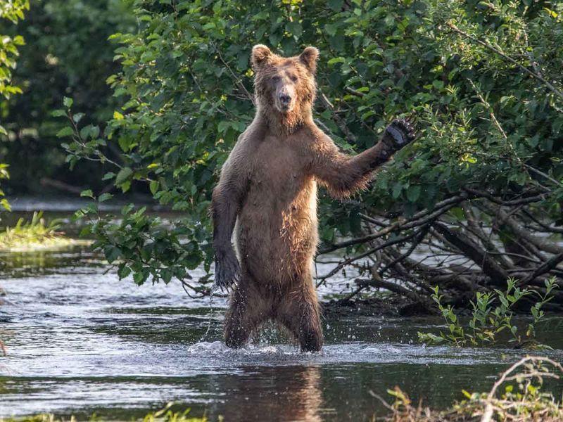 Bật cười với ảnh động vật hoang dã hài hước vui nhộn