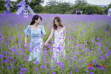 Vườn hoa oải hương thảo tím mộng mơ ở Hà thành khiến giới trẻ 'phát sốt'