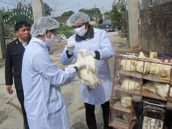 Đồng Nai triển khai hàng loạt giải pháp chủ động phòng chống dịch cúm gia cầm