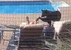 Ngủ quên bên bể bơi, người đàn ông giật mình phát hiện gấu sờ vào chân
