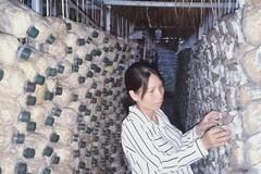 Bà chủ trại nấm hữu cơ khởi nghiệp chỉ từ 40 triệu đồng vay tín chấp, thất bại đến n lần