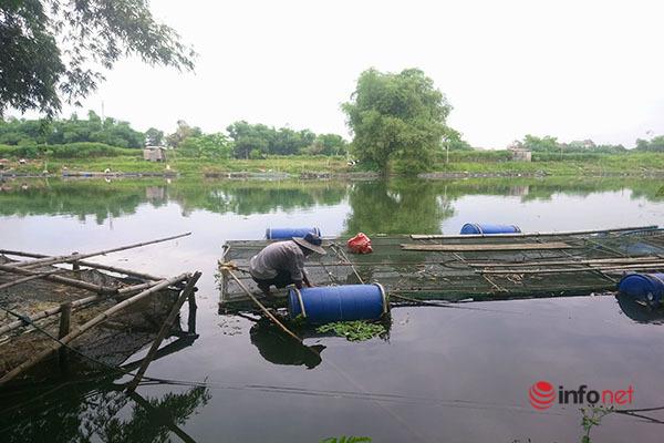 Chằng dây, tách hàng nghìn lồng cá trên sông Bồ trước khi bão số 5 'ập' vào Huế