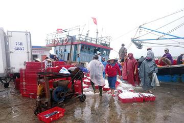 Huế: Cảng cá Thuận An hối hả mua bán hải sản, hơn 650 tàu cá vào bờ tránh bão số 5