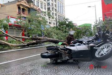 Huế: Hàng nghìn ngôi nhà tốc mái, cây xanh bật gốc la liệt sau bão số 5