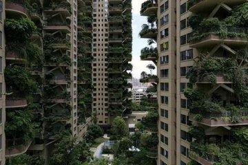 Trung Quốc: Toà nhà xanh ngỡ thiên đường sinh thái biến thành thảm hoạ vì muỗi tấn công