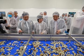 Tập đoàn TH khánh thành Nhà máy chế biến hoa quả tươi và thảo dược Vân Hồ