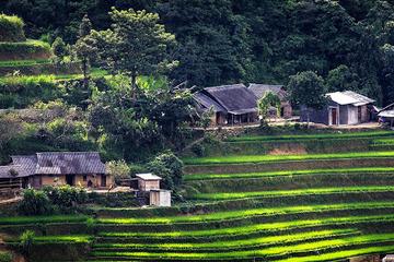 Có vài trăm triệu, tôi muốn bỏ phố lên núi thuê đất làm trang trại