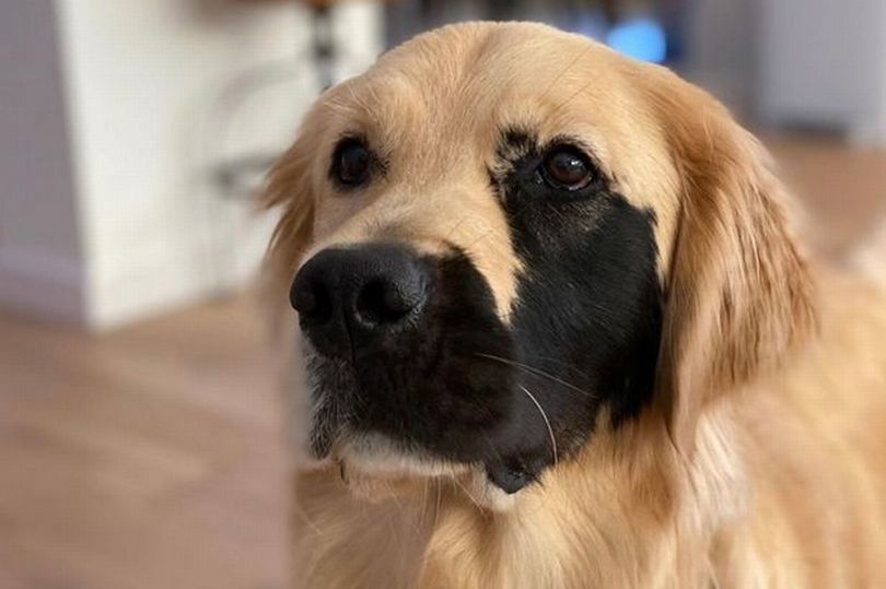 Chó sinh ra bị đột biến hiếm gặp trở thành ngôi sao mạng xã hội
