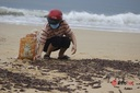 Quảng Bình: Ốc biển dạt vào bờ chất đống sau bão, dân rủ nhau nhặt về ăn
