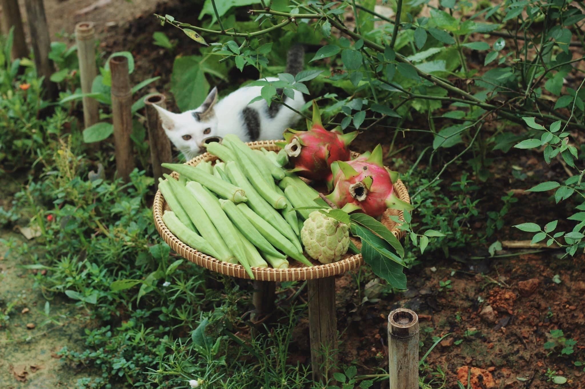 Khu vườn của mẹ bỉm sữa khiến bao người muốn 'bỏ phố về quê'