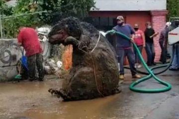 Kinh hoàng phát hiện 'chuột khổng lồ' trong đường ống nước ngầm