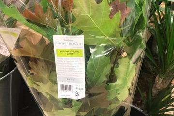 Sự thật về lá mùa thu có giá cắt cổ trong siêu thị Anh