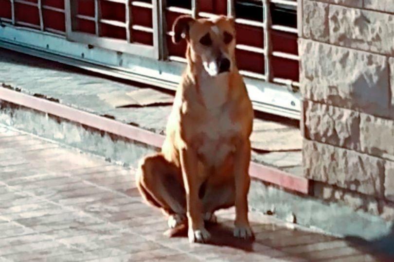 Cảm động chú chó trung thành chờ đợi người chủ đã qua đời