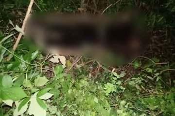 Người dân phát hiện thi thể một phụ nữ đang phân hủy trong rừng