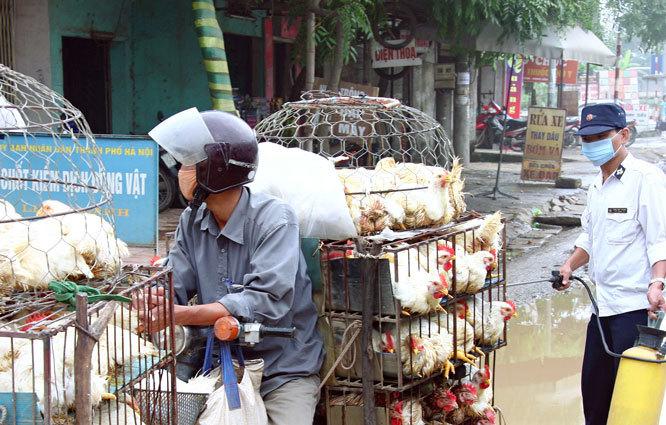 Hà Nội quyết liệt kiểm soát, phòng, chống bệnh dịch cúm gia cầm
