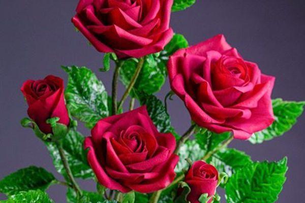 Sự thật về những bông hoa đẹp mê hồn khiến ai cũng trầm trồ tán dương