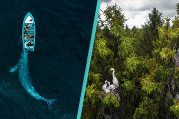 Mãn nhãn loạt ảnh về sự hùng vĩ của thiên nhiên nhìn từ trên cao