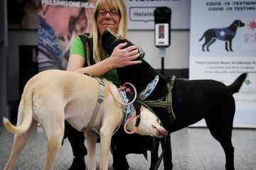 Quốc gia thứ 2 trên thế giới dùng chó nghiệp vụ phát hiện bệnh nhân Covid-19