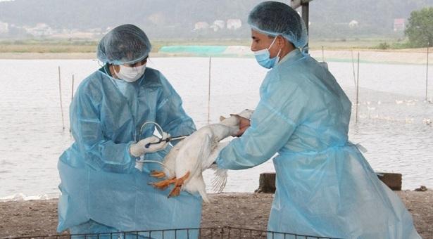 Hà Tĩnh chủ động ngăn chặn sự xâm nhiễm dịch bệnh cúm gia cầm