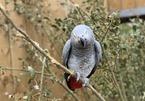 Hi hữu: Trục xuất loạt năm con vẹt chửi thề với du khách