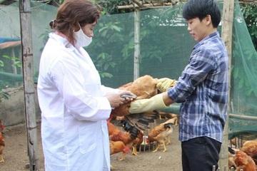 Hà Tĩnh phân bổ hơn 713.500 liều vắc xin cúm gia cầm về các địa phương để tiêm phòng