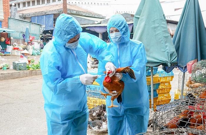Quảng Trị: Chặn virus cúm gia cầm tại chợ, khẩn trương triển khai phòng chống dịch