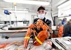 Giải cứu tôm hùm màu cam hiếm có tại Mỹ