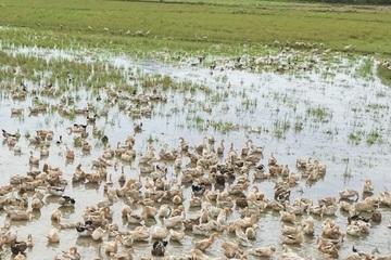 Ninh Thuận tổng vệ sinh môi trường phòng, chống dịch bệnh gia súc, gia cầm