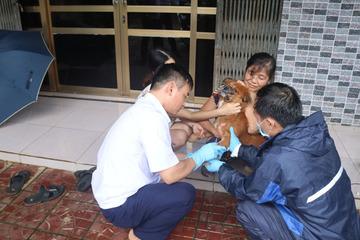 Lào Cai tiêm phòng 1,4 triệu liều vắc xin cúm gia cầm