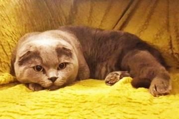 Khó tin con mèo có khả năng biến ước mơ thành sự thật được rao bán 3 tỷ đồng
