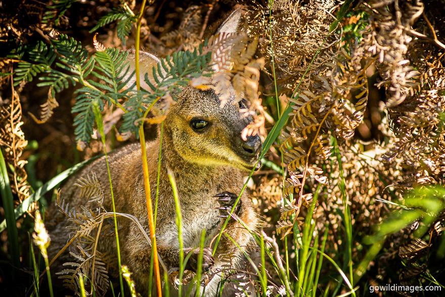 Mãn nhãn với khung cảnh tuyệt đẹp của tiểu bang Victoria, Australia