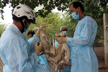 Bình Thuận: Tiêm phòng các loại dịch bệnh trên gia súc, gia cầm đạt hơn 1 triệu liều