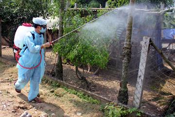 Quảng Ngãi: Xuất hiện ổ dịch cúm gia cầm A/H5N6 đầu tiên trên đàn vịt