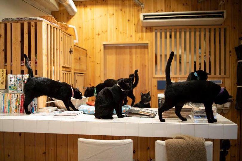 Ghé thăm quán cà phê mèo đen duy nhất trên thế giới