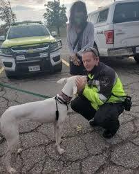 Hi hữu: Đóng đường băng sân bay để đuổi bắt chó