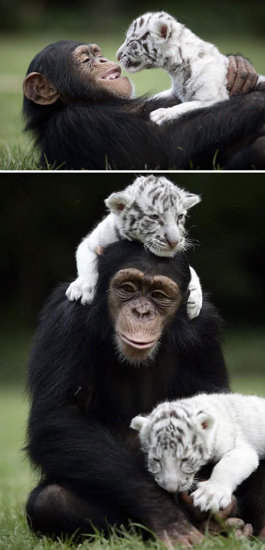 Tình bạn không biên giới trong thế giới động vật khiến mọi trái tim tan chảy
