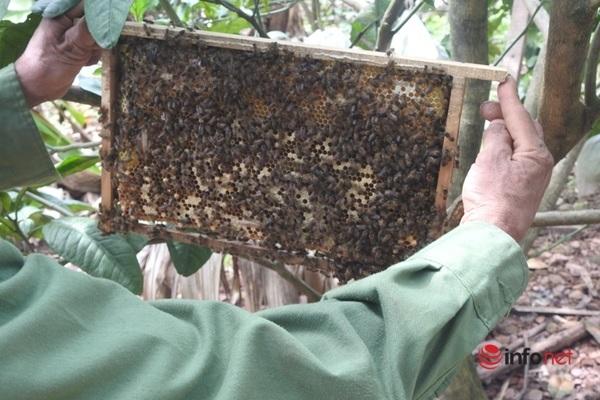 Hà Tĩnh: Chuyển giao kỹ thuật nuôi ong, hướng đi mới cho người dân vùng núi