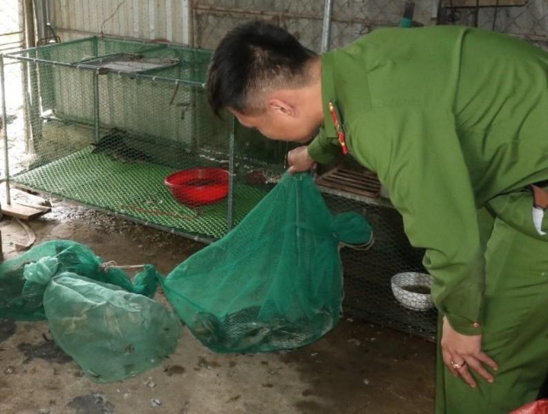 2 cơ sở thu mua chim trời trái phép bị thu giữ gần 2 tạ tang vật