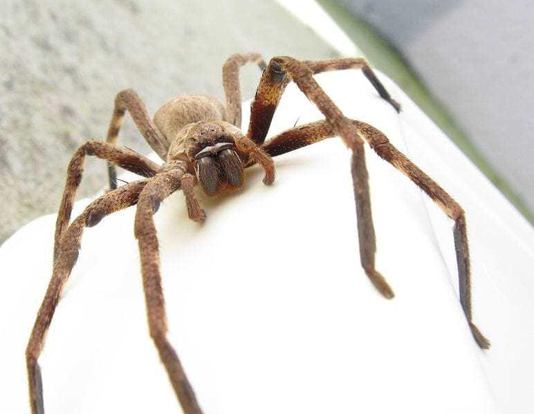 Hốt hoảng phát hiện nhện độc lẩn trốn bên trong tai nghe