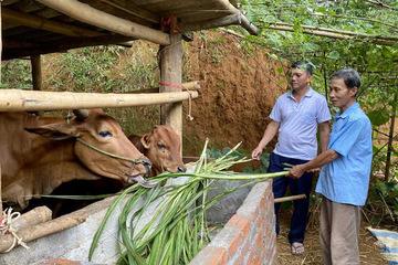 Sơn La giảm nghèo bền vững nhờ kết hợp đồng bộ nhiều giải pháp