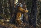 Loạt bức ảnh cuộc sống hoang dã ấn tượng nhất 2020