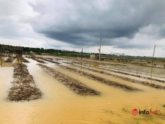 Vựa rau sạch lớn nhất Đà Nẵng tan hoang sau lũ, dân mất trắng