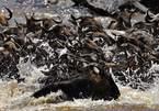 Cuộc di cư của động vật bên trong khu bảo tồn ở Kenya