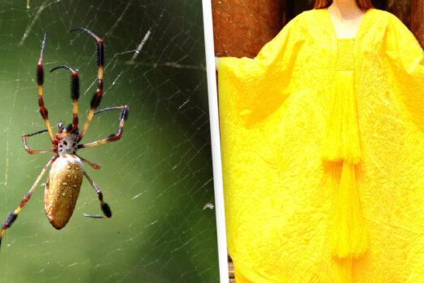 Cận cảnh tấm áo choàng làm từ tơ nhện độc nhất vô nhị